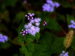 路傍に咲く花 P1160474zz