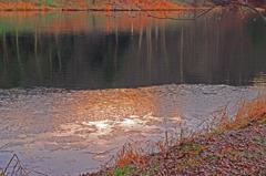 鴨池の朝 IMGP4027zz