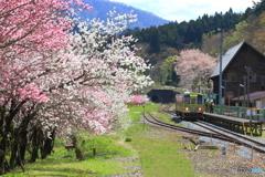 花桃の咲く駅