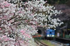 桃花の咲く駅②