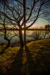 夕陽と木の影