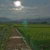 田んぼと太陽3