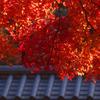御所迎賓館付近の紅葉