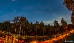 夜の谷汲ゆり園