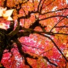 """Autumn colors """"Red"""""""