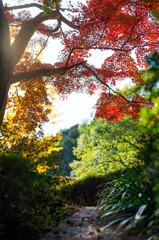 """Autumn colors """"Colorful"""""""
