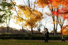 "Autumn colors ""Family Love"""
