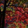 秋の景色~その1~