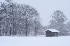 1月17日(雪)