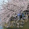 桜2021_6