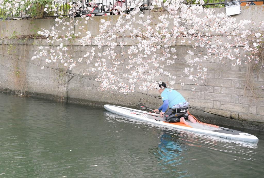 桜2021_7
