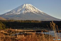 西日を浴びる富士