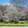 甲斐駒ヶ岳と春