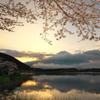 花見と富士と朝焼けと