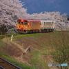 桜とフラワー長井線