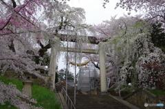 日本一の鳥居