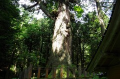 巨樹を訪ねて