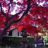 もみじ公園(清風荘)