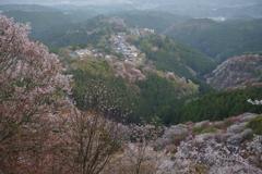 吉野山の朝