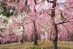 絢爛たる春