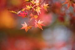 今年の紅葉