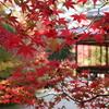 京、秋深まる