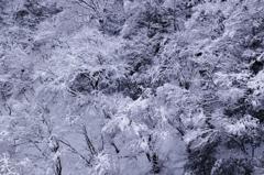 雪の華咲く