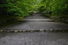 嵯峨野、青もみじ     /  京の旅 Ⅶ