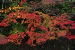 渓を彩る紅