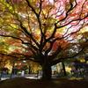秋を深呼吸