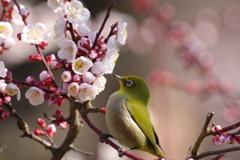 春の兆し Ⅶ