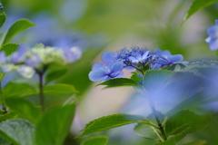 青に魅せられて