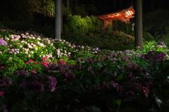 紫陽花のライトアップ