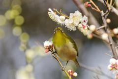 春の兆し Ⅱ