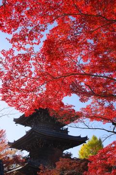 紅と三重塔