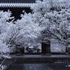南禅寺、雪