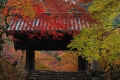 城跡の紅葉