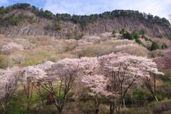 屏風岩と桜 Ⅱ