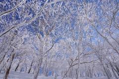 青と白の別天地へ  Ⅵ