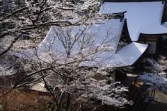 神護寺、煌めきの朝