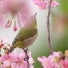 春が近づく