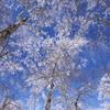 青と白の別天地へ Ⅱ