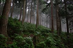 コアジサイの森 Ⅲ