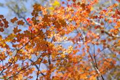秋色シーズン