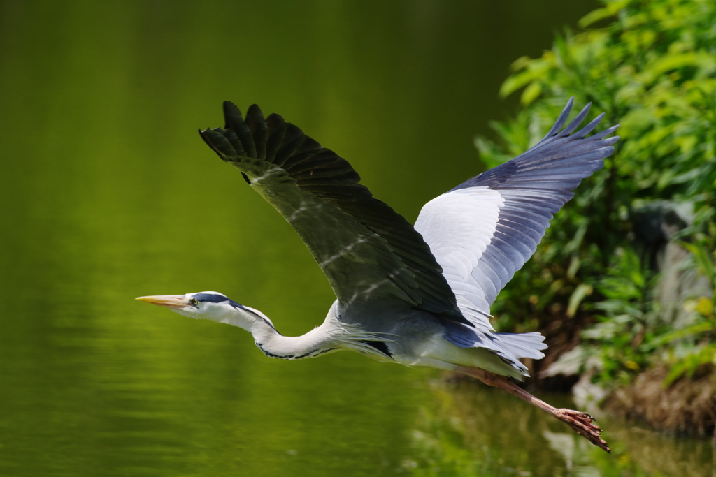 新緑の飛翔