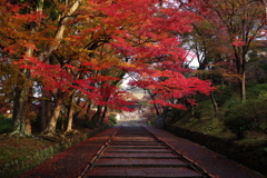 秋時雨の朝