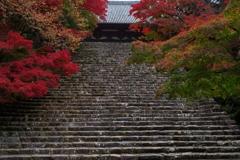 神護寺の紅