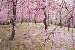 春のはじまり