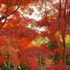 離宮公園の紅葉