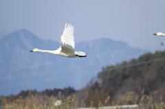 翼を大きく、大きく!